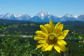 Summer in the Tetons