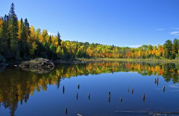 Beaver Pond in Fall