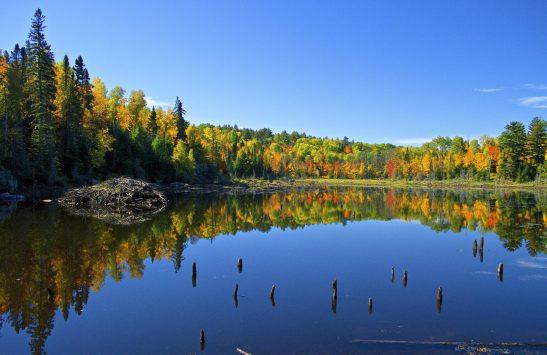 Beaver Pond in Fall