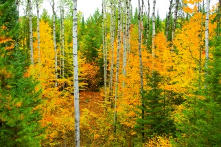 Fall in the Northwoods