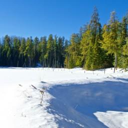 Snowy Silence