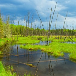 Storm Over the Beaver Pond